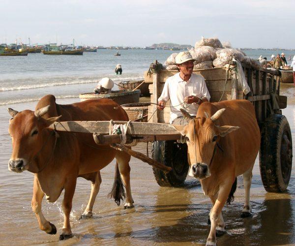 Fisketransport, Phan Thiet, Vietnam