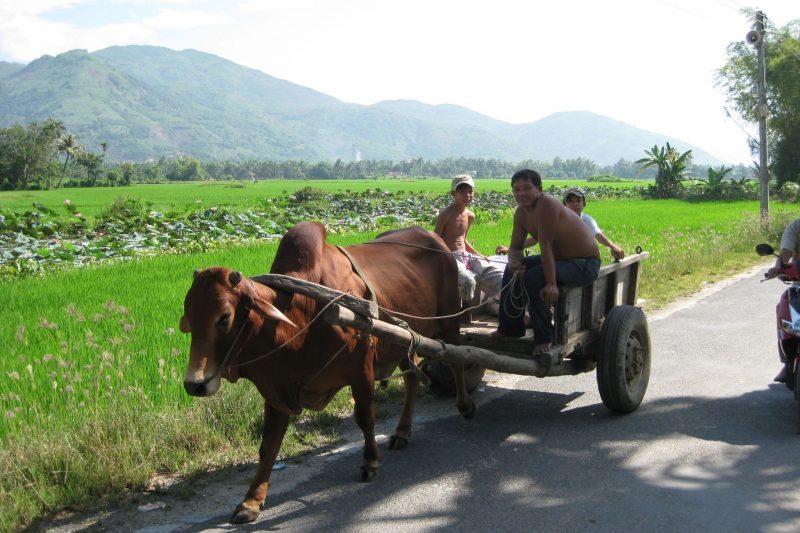 Vietnam juli 2009 317